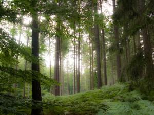 Der Klecker Wald